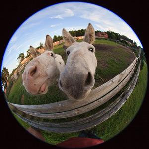 fish-eye-horses.jpg