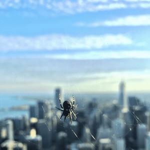 spider-details.png